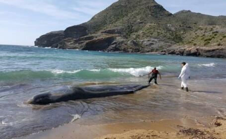 balenă moartă