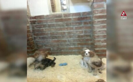 camera ascunsa pet shop