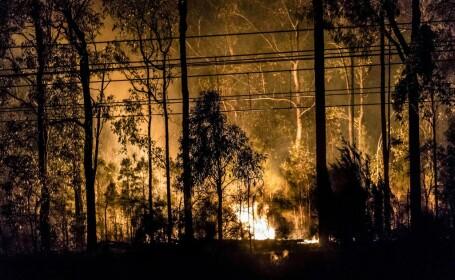 incendiu sydney