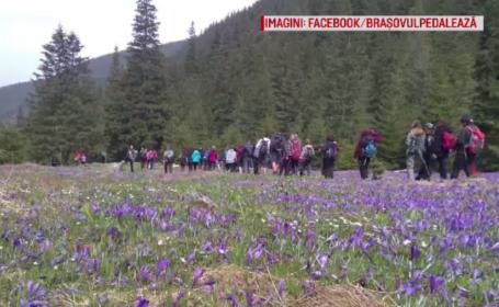 Zi splendidă pentru plimbări la munte. Iubitorii de natură au plecat cu ghizi în Făgăraș