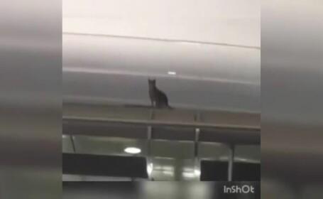 pisica aeroport