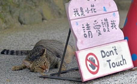 Povestea satului căzut în uitare, salvat de pisici. Acum e o populară destinație turistică