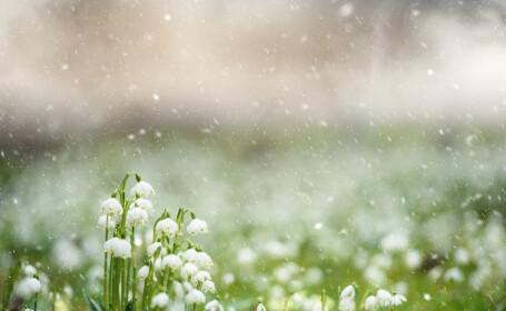 flori ninse