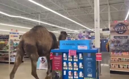 Motivul pentru care un bărbat a intrat cu cămila într-un magazin din SUA. - 4