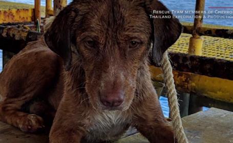 Câine salvat de pe mare
