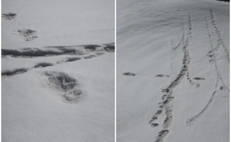 Armata indiană a anunțat că a găsit urme ale lui Yeti. Reacțiile stârnite pe rețele sociale