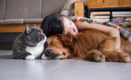 Studiu: Cât de predispuși sunt câinii și pisicile la infectarea cu coronavirus