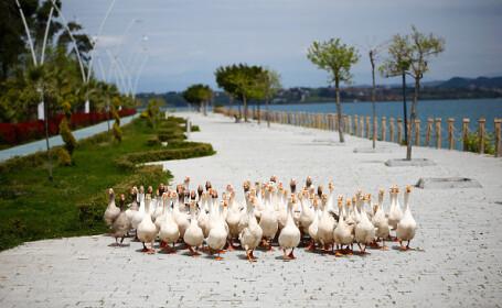 """Animalele umblă libere pe străzi în """"epoca"""" coronavirusului"""