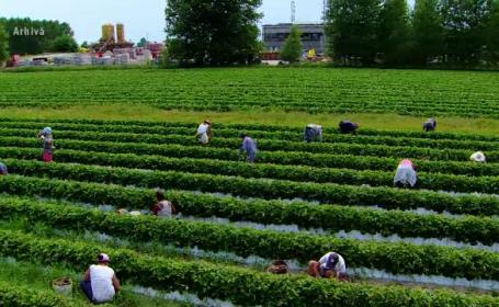 agricultori