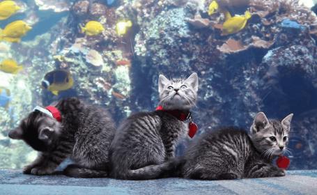 pisici acvariu