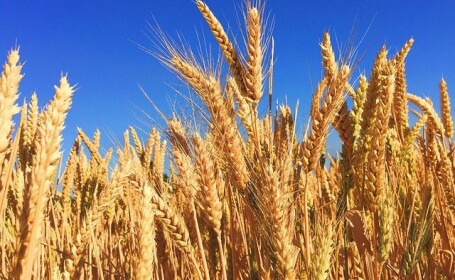 Până când mai are România pâinea asigurată. Motivul pentru care au fost interzise exporturile