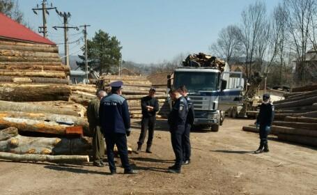 106 dosare penale și 2.000 de metri cubi de lemn confiscat. Totul într-o singură săptămână. GALERIE FOTO și VIDEO