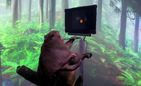 O maimuță care folosește un joystick, cea mai recentă reușită a Neuralink. Cum reușește