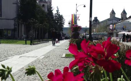 Peste 700 de mii de flori, plantate în Iași, înainte de Paște