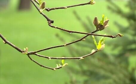 Vremea 29 aprilie. Nu ne părăsesc ploile. Care vor fi maximele zilei