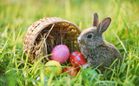 Cum a devenit iepurașul un simbol al Paștelui. Explicațiile experților