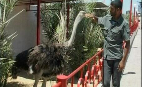 Zoo Palestina