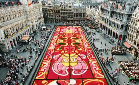 Un covor de 800.000 de begonii a fost aşternut în capitala Belgiei