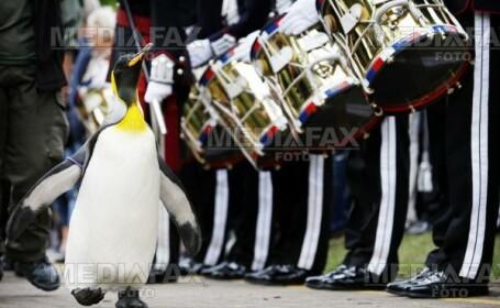 Un pinguin a primit titlul de Sir!