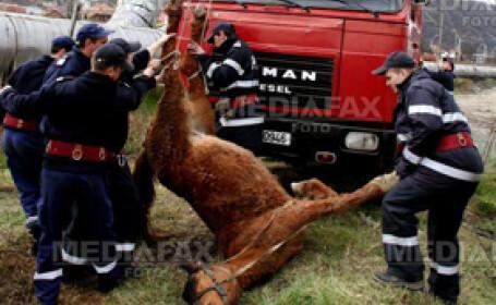 Un cal cazut intr-un canal a fost salvat de pompierii din Mures