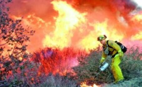 Zeci de hectare de miriste au fost devastate de un incendiu de proportii