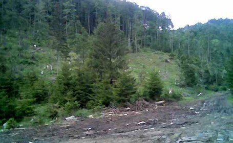 Zona Cheile Dambovicioarei, groapa de gunoi! Au grija turistii de asta