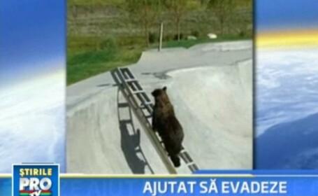 Cum ajuti un urs cazut intr-o pista de skateboard adanca de cativa metri?