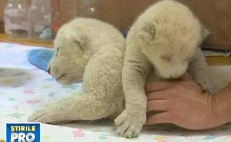 Alti doi lei albi s-au nascut tot acolo in decembrie.