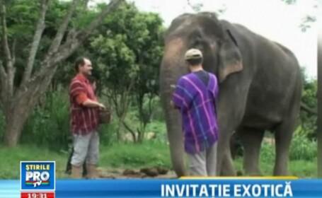 Cat te costa sa hranesti elefantii in Thailanda. Oferte speciale de vacante exotice pentru romani