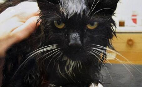 Si-a bagat pisica la cuptorul cu microunde. Animalul a emanat caldura 7 ore dupa ce a fost salvat