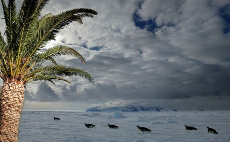 palmieri in Antarctica