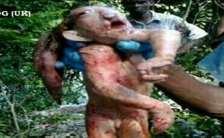 Creatura infricosatoare descoperita in Africa. Are 1 metru inaltime si gheare in loc de degete.VIDEO