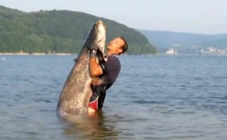 Cum arata somnul de 100 de kilograme, prins de doi pescari din Slovacia. VIDEO