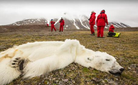 Urs polar mort in zona Svalbard din Norvegia