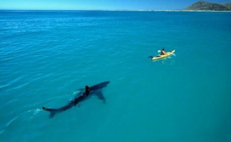 Alerta pe o plaja din Australia. Ce au vazut turistii iesiti sa faca o baie in Ocean