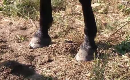 Tragedie fara explicatii in Timis. O fetita de 8 ani care se juca in fata casei a fost ucisa de cal
