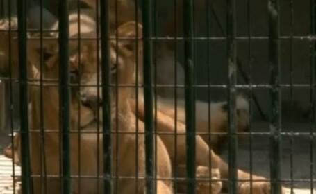 lei, zoo Craiova