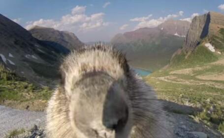Aparitie surprinzatoare in cadru. O marmota \
