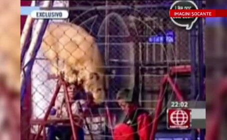 IMAGINI SOCANTE. O profesoara din Peru a fost la un pas de moarte, dupa ce a vrut sa le arate elevilor cat de docil e un leu