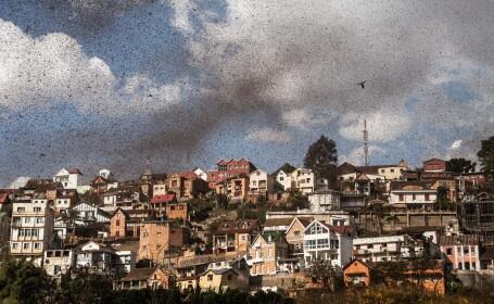Invazie de lacuste in Madagascar