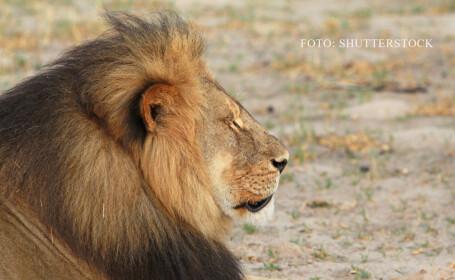 Fratele celebrului Cecil NU a fost ucis, in ciuda zvonurilor. Jericho a fost vazut cu o leoaica, intr-o \