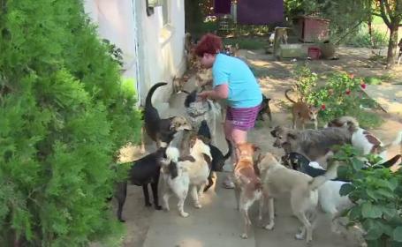 Doua femei din Gaesti cresc peste o suta de caini si pisici in curtile lor. Vecinii sunt exasperati: \