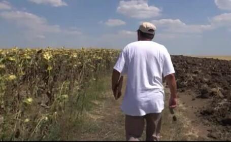 Romania se usuca: plantele mor pe mii de hectare, animalele isi musca stapanii. Cum se face agricultura \