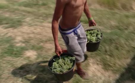 Zonele din Romania unde seceta a fost mana cereasca pentru cultivatori. Cine sunt romanii care se mandresc cu recolte-record