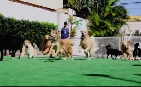 Tara unde cainii au parte de petreceri si piscine speciale. \