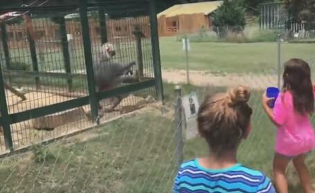 Reactia virala unui babuin de la Zoo atunci cand a fost enervat de copii. \