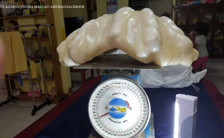 perla uriasa gasita in insulele Palawan