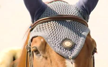 Incepe Balcaniada Ecvestra. 278 de cai pur sange in valoare de peste 50 de milioane de euro au venit in Romania