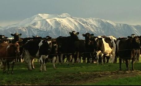 furt de vaci