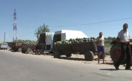 Producătorii de pepeni din Dăbuleni își vând marfa pe stradă, în caniculă
